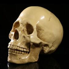 1:1 Life Size Human Anatomical Anatomy Resin Head Skeleton Skull Teaching Model