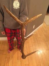 5 Point Elk Antler Shed Wild Idaho Horn Lamp Art Decor Mount Deer Moose #1 Grade