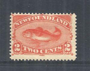 NEWFOUNDLAND SCOTT 48 MH FINE - 1887 2c RED ORANGE COD FISH ISSUE   CV $40