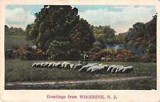Woodbine New Jersey Greetings From man with sheep flock antique pc Z26418