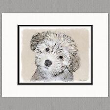 Havanese Puppy Dog Original Print 8x10 Matted to 11x14
