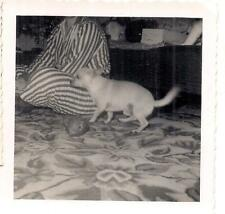 Out of Frame Headless Pajama PJ Person Chihuahua & Cat Head Toy Christmas Photo