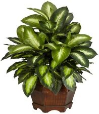 Artificial Plant 24 in. H Green Golden Dieffenbachia Silk Plant with Large Base