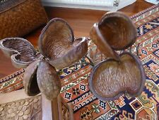 5 X BEAUTIFUL BUNCH DRIED NATURAL FINISH PODS 80-87CM LENGTH UNUSUAL/STUNNING