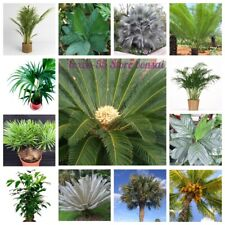 20Pcs Palm Tree Seeds Rare 10 Kinds Beautiful Potted Garden Plants Exotic Bonsai