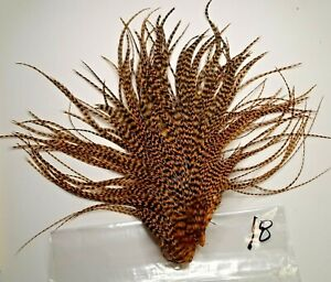 BURNT ORANGE GRIZZLY ROOSTER SADDLE HACKLE FLY TYING SCHLAPPEN LONG FEATHERS 18