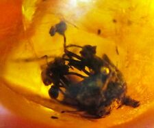 Nice flower in Dominican Amber fossil - plant material .