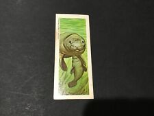 "1969 - Sugar Daddy ""Wildlife"" Baby Animals Card #49 Manatee"