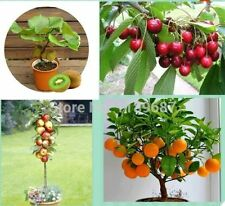 100 Combo Bonsai Fruit Tree Seeds , Apple, Orange, Kiwi, Cherry Seeds Very Nice