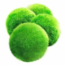 4 LUFFY Marimo Moss Balls - Aesthetically Beautiful & Create Healthy Environm...