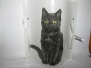 1 Tischlicht / Windlicht  schwarze Katze