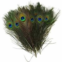 PEACOCK TAIL FEATHERS Feather NATURAL 15-30cm LONG Bouquet MILLINERY CRAFT
