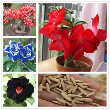 100% True Adenium Obesum Seeds Desert Rose Seeds Garden Home Bonsai Plant Flower