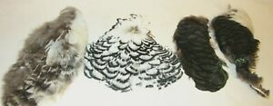 4 ~ PIECES PHEASANT SKIN's ~ WHITE & GREEN FEATHERS ~ GREAT FOR MAKING JEWELRY