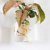 Simple Verre Vase Mural Pot de Fleur Transparent Terrarium Hydroponique
