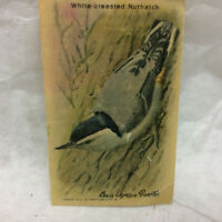 Vintage White-breasted Nuthatch Bird Trade Card Advertising Arm & Hammer