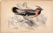 WAXWING OR BOHEMIAN CHATTERER NATURALIST'S LIBRARY VINTAGE BOOK BIRD PRINT PL 11