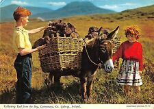 B100675 collecting turf from the bog connemara galway ireland donkey types