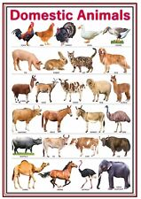 A4 Poster Sign Educational Children Nursery Childminder Domestic Animals