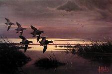 LES KOUBA BlueBill Duck PRINT EARLY BILLS