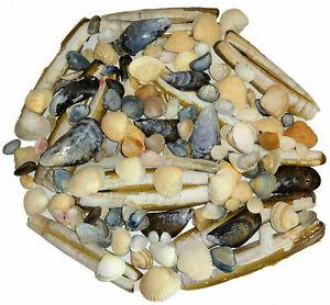 Muscheln Muschelmix Nordsee maritime Deko verschiedene Sorten 300 g