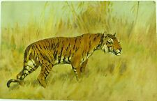 SUPERB STEHLI FRERES ST Z. F. EARLY 1900'S TIGER POSTCARD NO 121