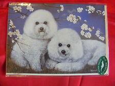 CARTE + ENVELOPPE - chien   2 BICHONS FRISES