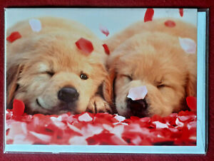 HUMOUROUS C & DOG GREETING CARDS by Avanti Press.  Cello wrapped.  New