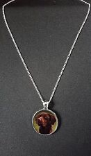 "Chocolate Labrador Pendant On 18"" Silver Plated Fine Metal Chain Necklace N788"