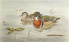 "Jon Robertson ""Wood Ducks"" Hand Signed & Numbered Art Print bird hunting OBO"