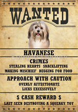 "Havanese Wanted Poster Fridge Dog Magnet Large 3.5"" X 5"""