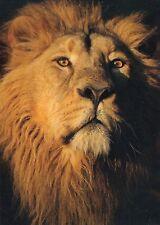 (48161) Postcard Lion - unposted