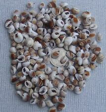 20g Packet Of Mixed Shells Dolls House Miniature Garden Craft Accessory Type E