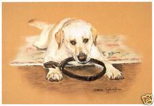 Labrador Retriever GIALLO cani ARTE STAMPA IN EDIZIONE LIMITATA