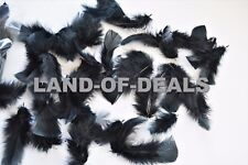 80+ Black turkey feathers loose small body feathers plumage real feather 0.5 oz