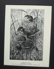 Lithograph Small (up to 12in.) Black Art Prints