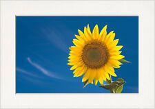 Yellow Sunflower Blue Sky Art Print in Card Picture Mount for your own A4 frame