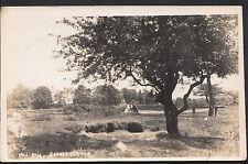 London Postcard - Mill Hill, Barnes Common   DR681