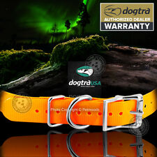 "Dogtra Genuine 1"" x 30"" Dog Collar Strap Orange 1803NC 1804NC 1900NCP 1902NCP+"