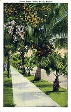 STREET SCENE, MIAMI BEACH, FLORIDA. FL. PALM TREE LINED WALKWAY & STREET.