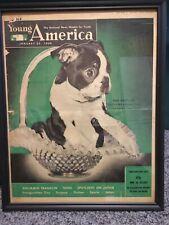 1949 Framed Newspaper Cover Of A Boston Terrior