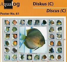 AQUALOG Poster The Most Beautiful Discus # 3, LAMINATED