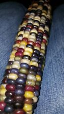 "Indian Corn Seed 1/4 lb Giant 14""+ Cobs Halloween fall decor edible multicolored"