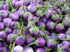 Thai Purple mini round eggplant 30++seeds Vegetable