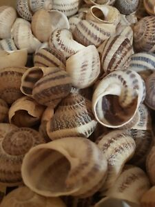 Shells - 190 Large Escargot/Snails Shells for Shelldwelling Cichlids/Tank Decor
