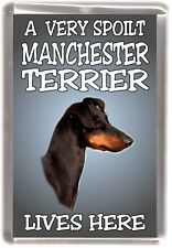 Manchester Terrier Fridge Magnet  A VERY SPOILT MANCHESTER TERRIER LIVES HERE