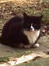 SPONSOR OREO A RELOCATED FERAL CAT COLOR RESCUE PHOTO HELP FEED PAY VETERINARY