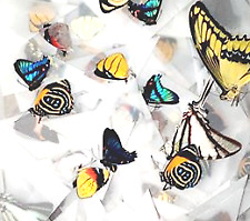 Assortment of 25 Colorful A1 Tropical Butterfly Specimens - Unmounted