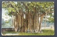1909 Honolulu Hawaii Newark New Jersey Banyan Tree Real Picture Postcard Cover