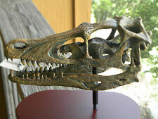 Dinosaur Velociraptor Skull model with stand and name plate jurassic park